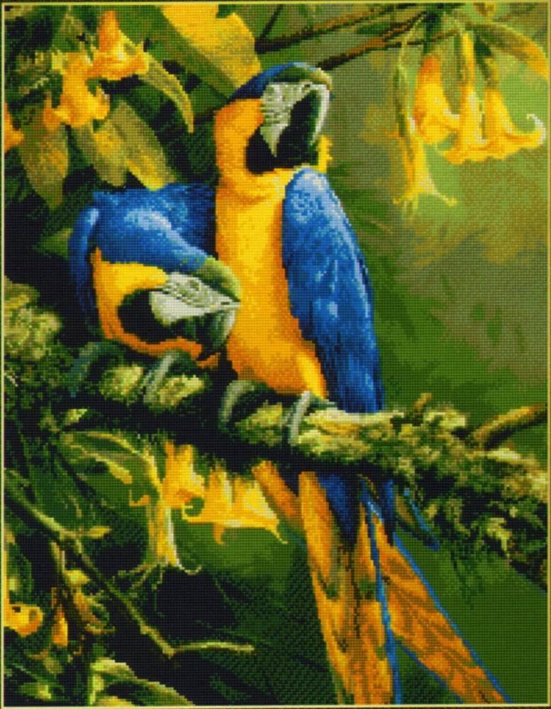 вышивку попугая