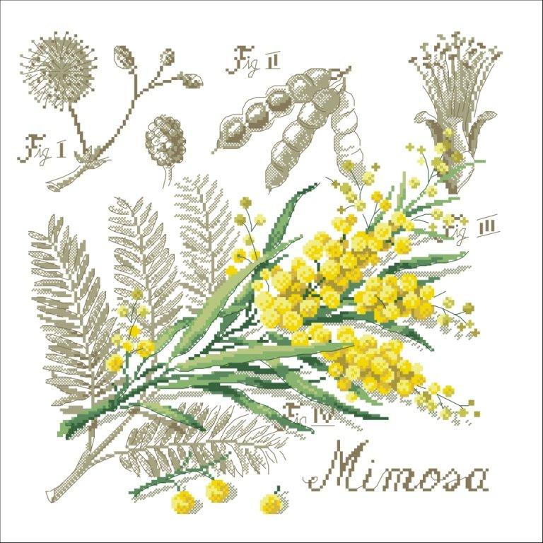 Мимоза - Цветы, натюрморты - Схемы вышивки на shemka.at.ua - Схемка