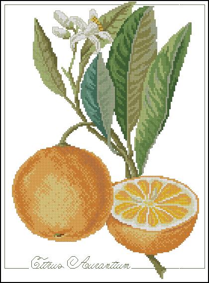 Натюрморт апельсины схемы крестом
