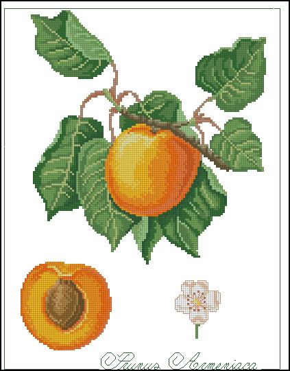 Вышивка крестом абрикос схемы 27